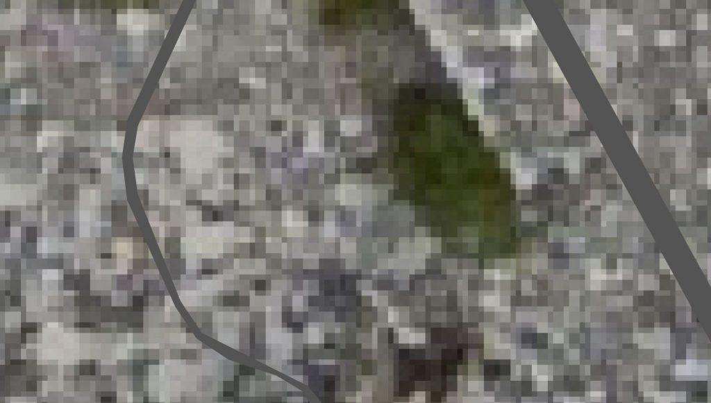 Confronto tra immagine raster e vettoriale