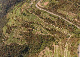 Immagine aerea di versante terrazzato e pendente nelle Cinque Terre