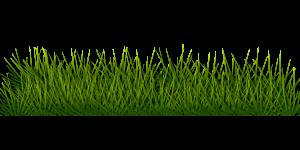 disegno di erba e prato erboso