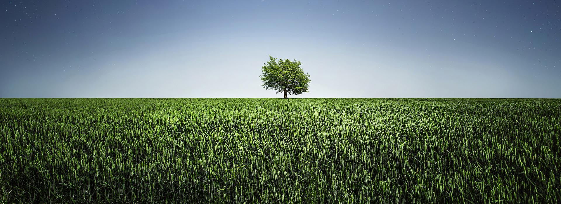 immagine in cui è rappresentato un campo erboso ed un albero