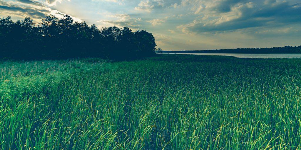 Immagine che rappresenta un prato erboso ed un bosco in lontananza