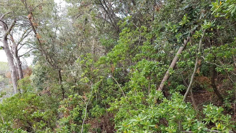 vegetazione in sito durante rilievo LiDAR