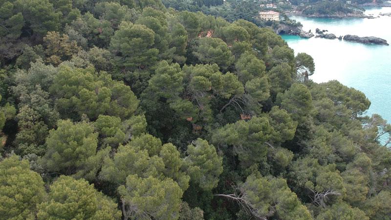 foto aerea della vegetazione in sito durante rilievo LiDAR