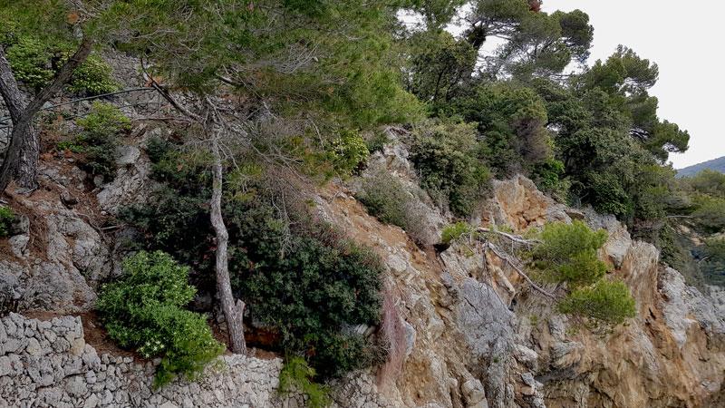 vegetazione su roccia in area di rilievo con LiDAR